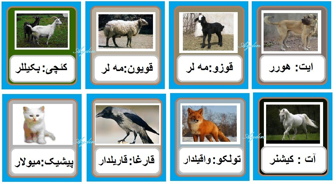 http://azerbaijani.arzublog.com/uploads/azerbaijani/2sas_a2.jpg