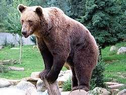 http://azerbaijani.arzublog.com/uploads/azerbaijani/ayi.jpeg