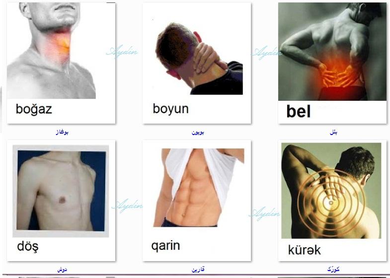 http://azerbaijani.arzublog.com/uploads/azerbaijani/badan_l1.jpg