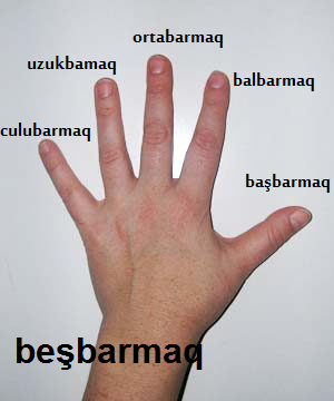 http://azerbaijani.arzublog.com/uploads/azerbaijani/barmaqlar_l.png