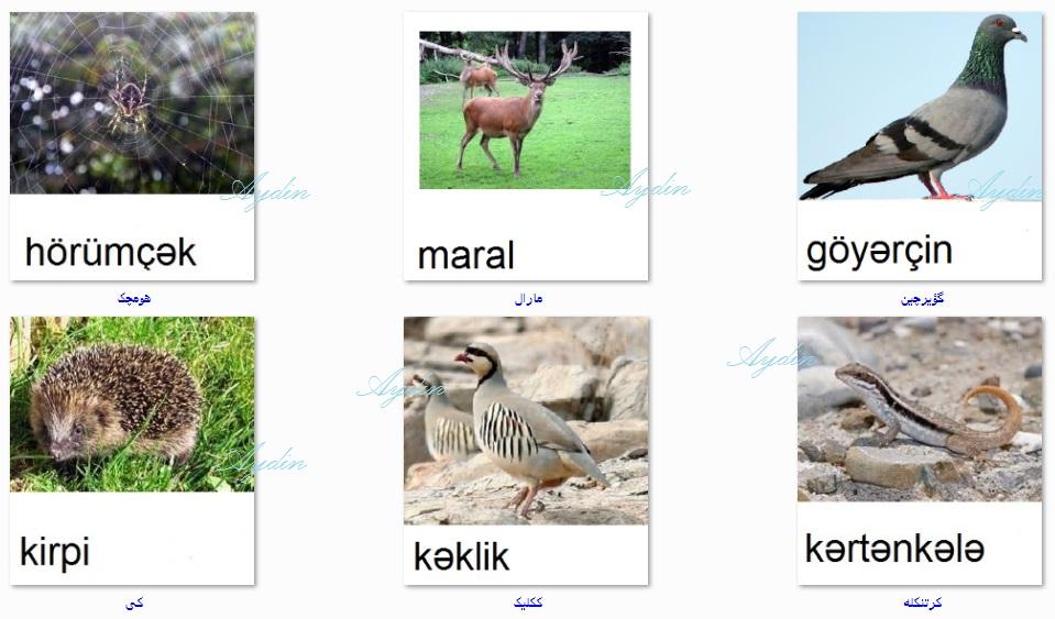 http://azerbaijani.arzublog.com/uploads/azerbaijani/f_c.l1.jpg