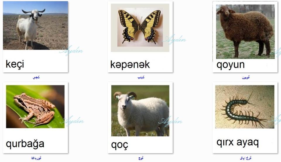http://azerbaijani.arzublog.com/uploads/azerbaijani/f_c.l2.jpg