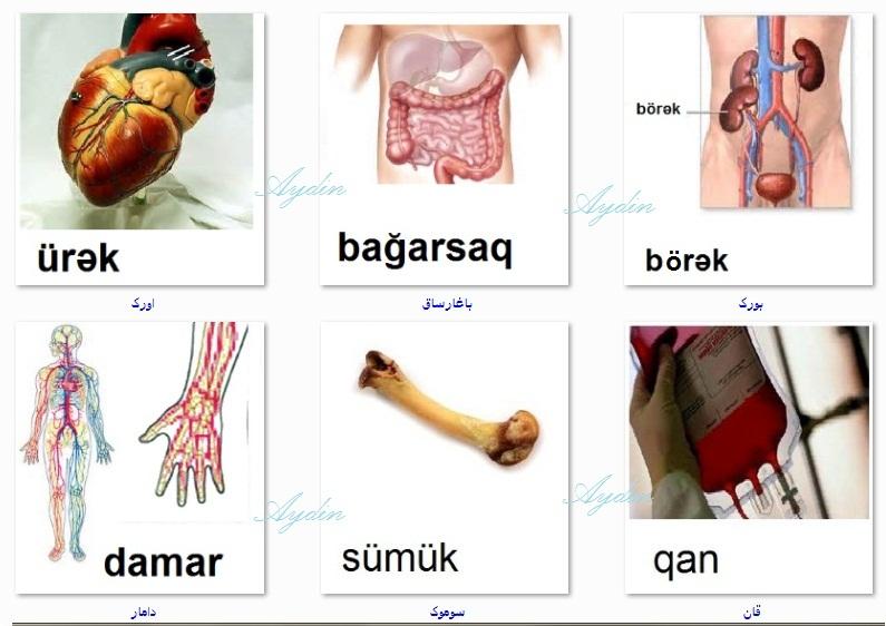 http://azerbaijani.arzublog.com/uploads/azerbaijani/orqan._l1.jpg