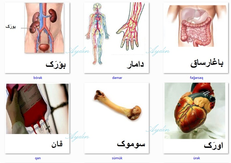 http://azerbaijani.arzublog.com/uploads/azerbaijani/orqan_a1.jpg